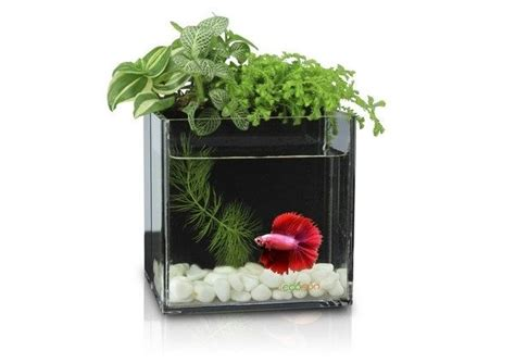 Fish Tank Planter by A Dialogue Between Flowers And Fish Aquarium Planter Fish