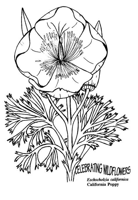 secret garden coloring book ca file eschscholzia californica california poppy gif