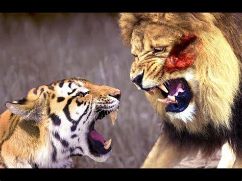 film ular vs harimau kucing terbesar inilah kucing terbesar di dunia