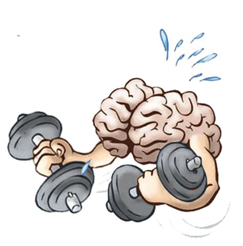 rein in your brain do it yourself mental for riders and drivers books excellent brain apps to boost your brain function
