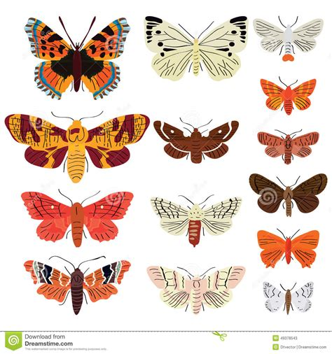Butterfly Set butterfly set stock vector image of blank beautiful