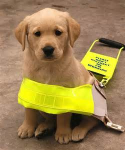 Partially Color Blind Know Something About Guide Dogs Care Your Pet Dog Or Cat