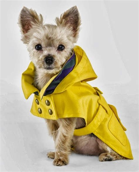 dog house clothing 25 best ideas about dog clothing on pinterest pet clothes small dog clothes and