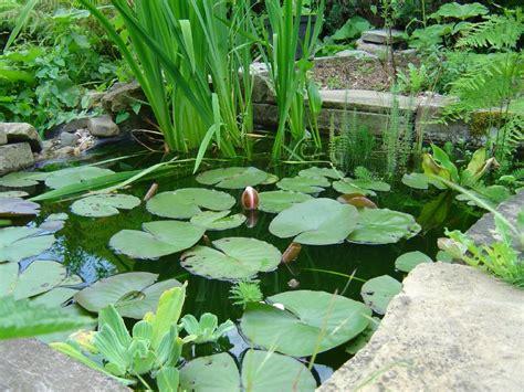 plante pour etang jardin mon jardin aquatique fred l apiculteur exometeofraiture