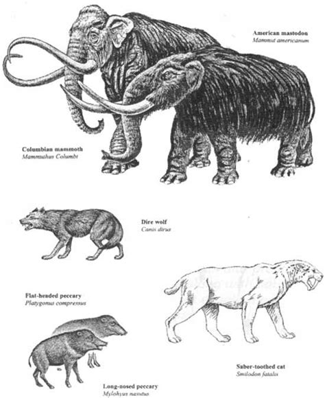 animal during great ice age 9 best images about ice age mammals on pinterest ice age