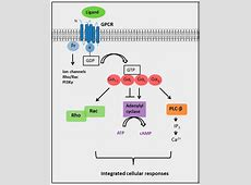 IJMS | Free Full-Text | G Protein-Coupled Receptor ... G Protein Coupled Receptors Gpcrs
