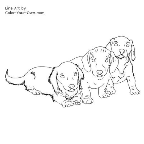 what color will my puppies be dachshund puppy coloring page