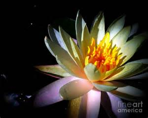 Lotus Flower Painting Lotus Flower Painting By Tania Rodamilans