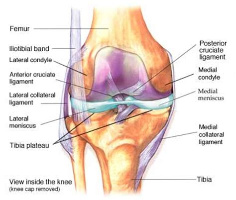 On Interior Of Knee by Inside Of Knee
