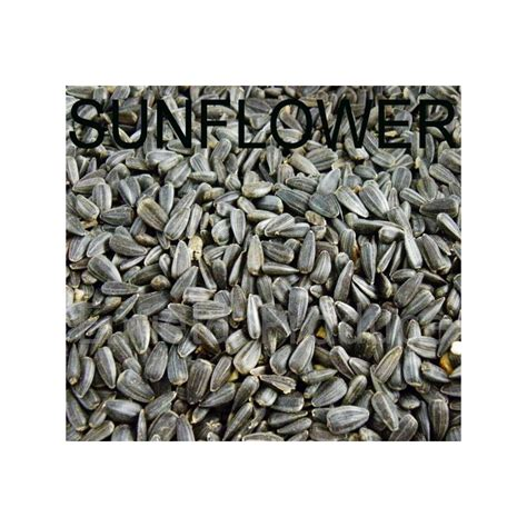 black sunflower bird seed for sale shop online or