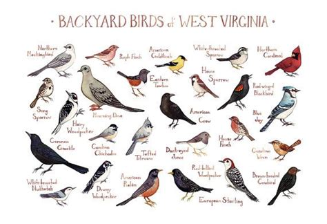 backyard birds of virginia 17 best images about birding id and info on pinterest