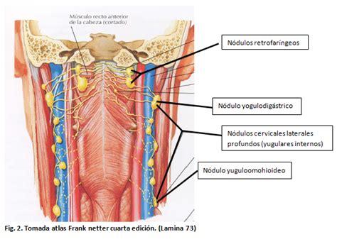 grupos ganglionares toracicos linfaticos del cuello thinglink
