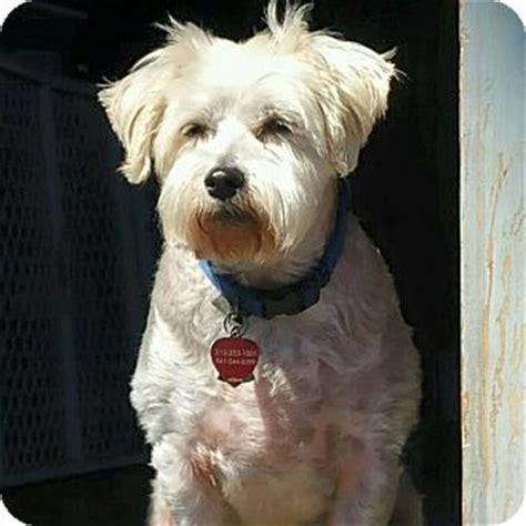 all breed puppy rescue ohio small breed rescue ohio breeds picture