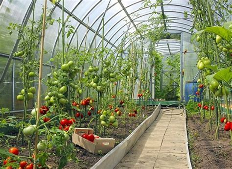 5 Considerations for Year Round Greenhouse Growing