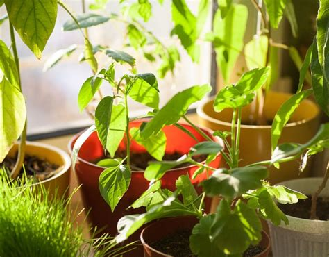 indoor plants singapore home tips the best indoor plants for the singapore home