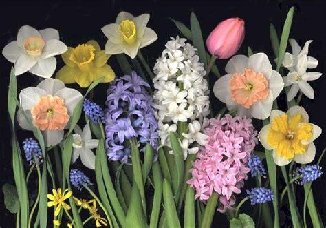 fiori della primavera primavera le foto pi 249 37 40 pourfemme