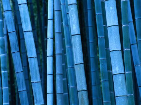 blue bamboo wallpapers and images wallpapers pictures photos