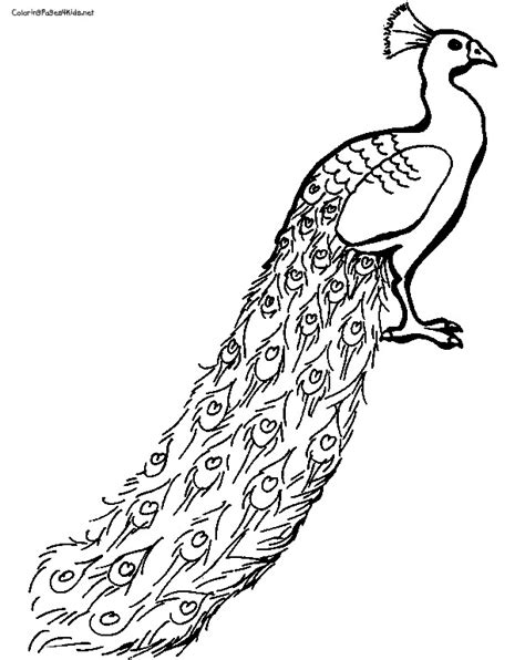 indian peacock coloring page indian peacock drawing