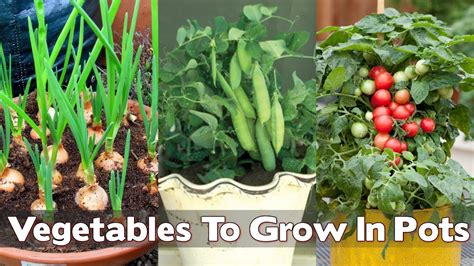 vegetables grown in vegetables that grow well in pots home design ideas and