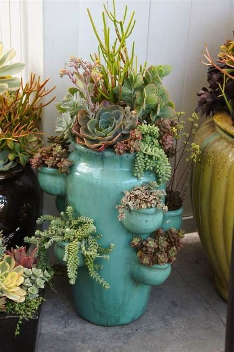 15 best succulents i think i m in love images on