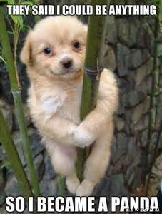Rules of the jungle lol pictures of funny dogs