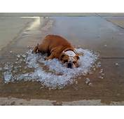 Dogs And Hot Weather  17 Tips For Keeping It Cool This Summer Dog