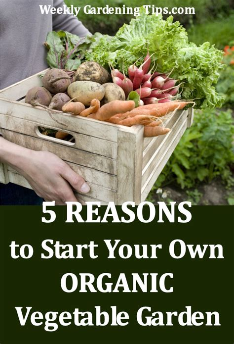 how to start an organic vegetable garden in your backyard how to start an organic garden in your backyard how to