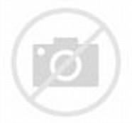 Gambar Anak Kucing Yang Lucu Berbulu putih