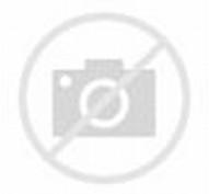 10 Gambar Anak Kucing Yang Lucu Dan Menggemaskan