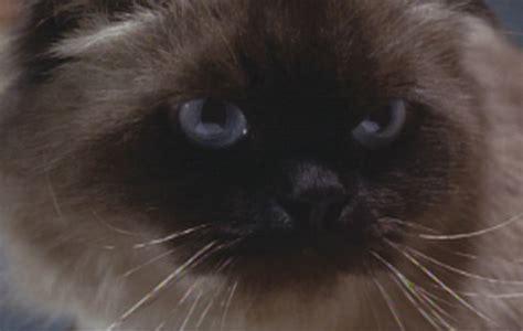 homeward bound names homeward bound ii lost in san francisco 1996 cinema cats