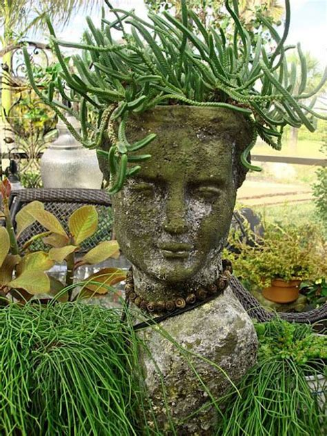medusa planter medusa hair succulents pinterest gardens planters