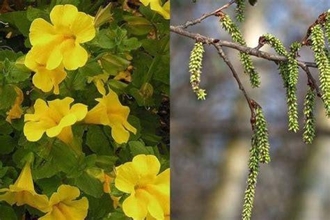 fiori di bach per neonati mimulus fiore di bach per bambini naturopataonline