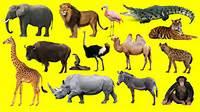 Wild Animal Names Learning