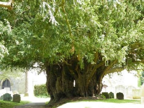 meaning of trees 1000 images about language of flowers on pinterest