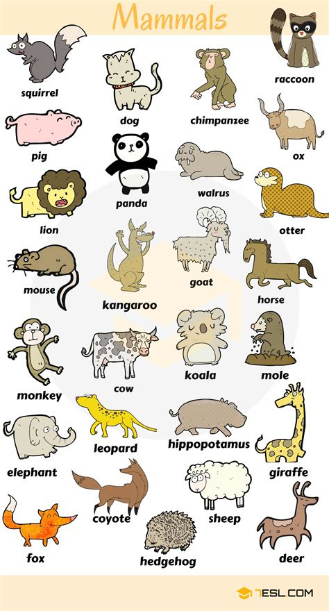 animal names types  animals  list pictures