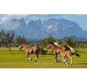 Patagonian Gauchos And Their Horses Sheep Wildlife Of Torres Del