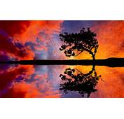 Tree Sunset Reflection Wallpapers Pictures Photos Images