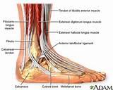 Acute Ankle Pain Photos