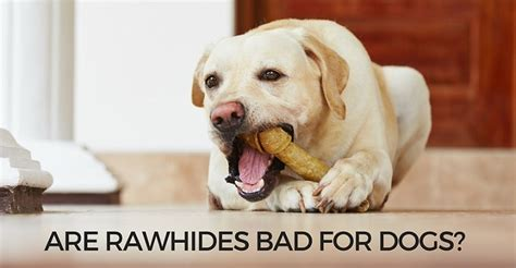 rawhide bad for dogs are rawhides bad for dogs and puppies petpace