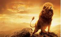 Lion Hd Wallpaper 291