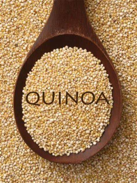 can dogs quinoa can i give my quinoa quinoa is healthy for dogs