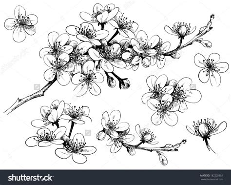 Cherry Blossom Wall Mural drawing cherry blossoms drawing art library