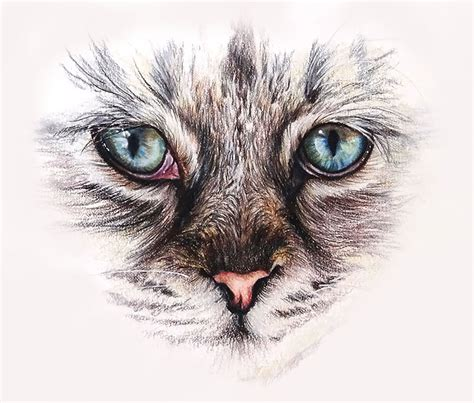 White Colorless Cat Eye how to draw cat with colored pencils
