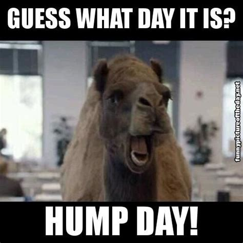 Wednesday Hump Day Meme - guess what day it is hump day funny camel geico humor