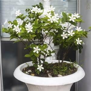 plante grimpante d int 233 rieur liste ooreka