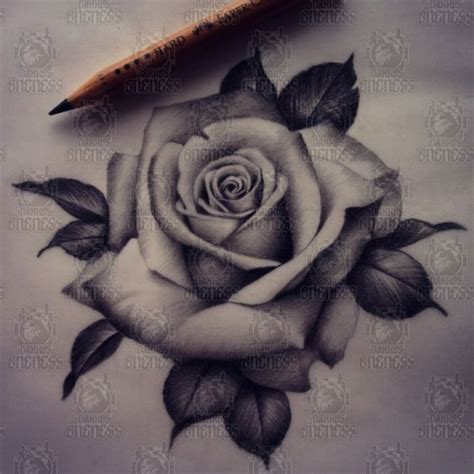 rose tattoo design tattoos on tattoos and