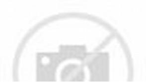 Gambar Burung Kutilang Cantik dan Eksotis ~ Kumpulan Gambar & Foto ...