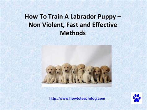 how to discipline puppy how to a labrador puppy non fast and