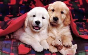 Cute puppies puppies wallpaper 22040869 fanpop
