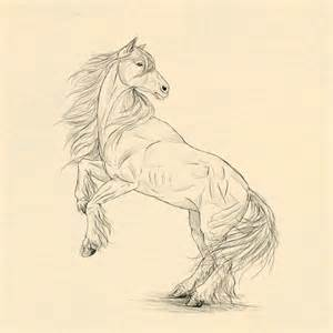 How to draw animals horses their anatomy and poses tuts design